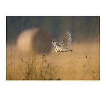 Barn Owl over farmland Photographic Print