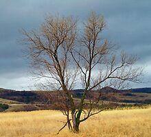 Green Moss Tree by Diane Trummer Sullivan