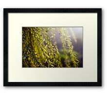 Spring. Weeping willow. Framed Print
