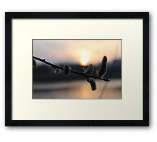willow againg Framed Print