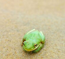 Little Green Frog on the Beach by molicophoto