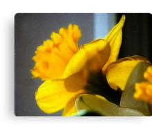 For the Frill of It All Canvas Print