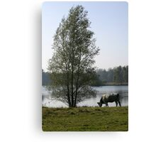 The cow & the tree Canvas Print