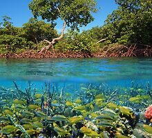 Split image mangroves and shoal of tropical fish by Dam - www.seaphotoart.com