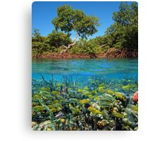 Split image mangroves and shoal of tropical fish Canvas Print