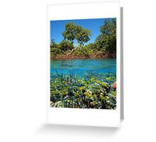 Split image mangroves and shoal of tropical fish Greeting Card