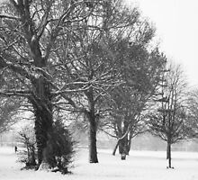 A Snowy Day in Black and White by laurenpittard