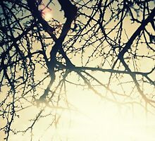 Backlit Branches on a Summers Day by laurenpittard
