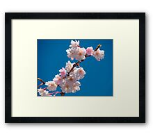 Blooms and Blossoms Framed Print