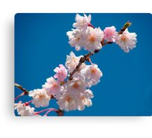 Blooms and Blossoms Canvas Print