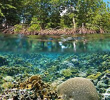 mangrove trees above waterline and coral reef underwater by Dam - www.seaphotoart.com