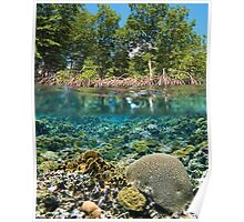 mangrove trees above waterline and coral reef underwater Poster