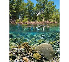 mangrove trees above waterline and coral reef underwater Photographic Print