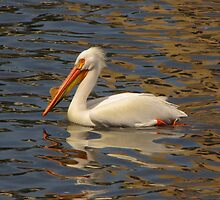 American White Pelican by Lee-Anne Carver