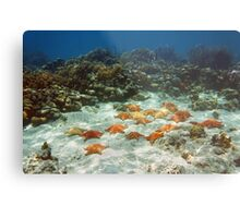 Many starfish underwater in a coral reef Metal Print