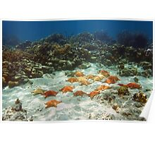 Many starfish underwater in a coral reef Poster