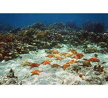 Many starfish underwater in a coral reef Photographic Print