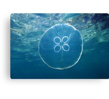 Moon jellyfish and water surface Canvas Print