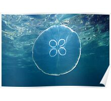 Moon jellyfish and water surface Poster