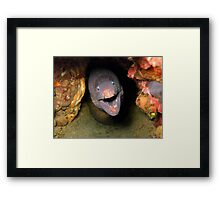 Moray eel underwater Framed Print
