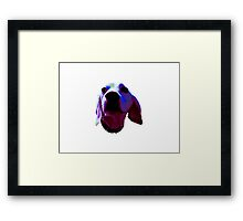 Silly Sully Framed Print
