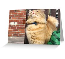 A Most Magnificent Moggy Greeting Card