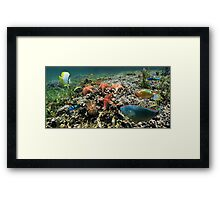 Panorama on a coral reef with fish and starfish Framed Print