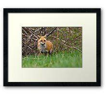 Momma Fox Framed Print