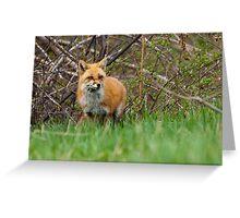 Momma Fox Greeting Card