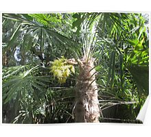 Flowering Palm Tree Poster