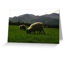 Those Keswick Sheep Greeting Card