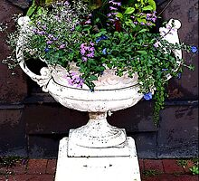 Potted Plants by vigor