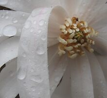 Star in The Rain by Nicole S. Moore