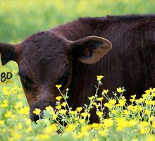 Smell my buttercups???? mmmmmmm.... by Ruth Lambert