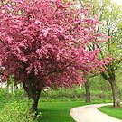 Spring in the Park by lorilee