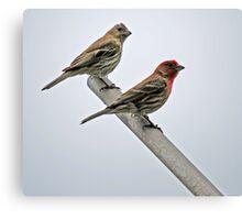 Bird Parents Canvas Print