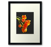 Orange tulips in dappled sunlight print Framed Print