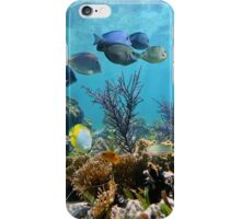 Caribbean seabed with coral and tropical reef fish iPhone Case/Skin