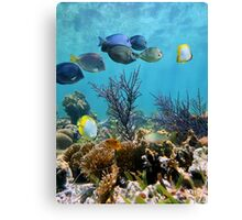 Caribbean seabed with coral and tropical reef fish Canvas Print