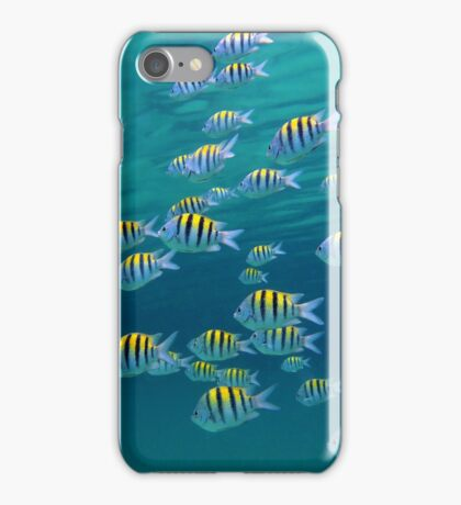 School of Sergeant-major fish near water surface iPhone Case/Skin