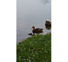 Lonely duck Photographic Print
