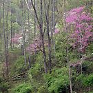 Spring Forest by Kent Nickell