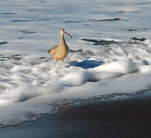 Shore Suds by Karen Zimmerman