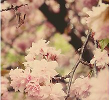 Cherry Blossom II Photographic Print