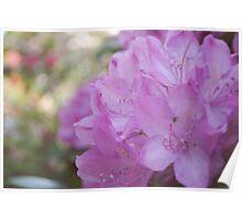 Pink Flower Spring Summer Poster
