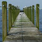 Seagull Pier by NikonJohn