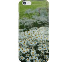 Daisies as Far as you can See iPhone Case/Skin