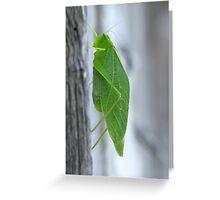 Sounds of Summer - Katydid Greeting Card