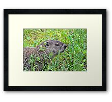 Groundhog day Framed Print