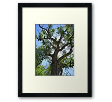 Mother Earth's Child....... Framed Print